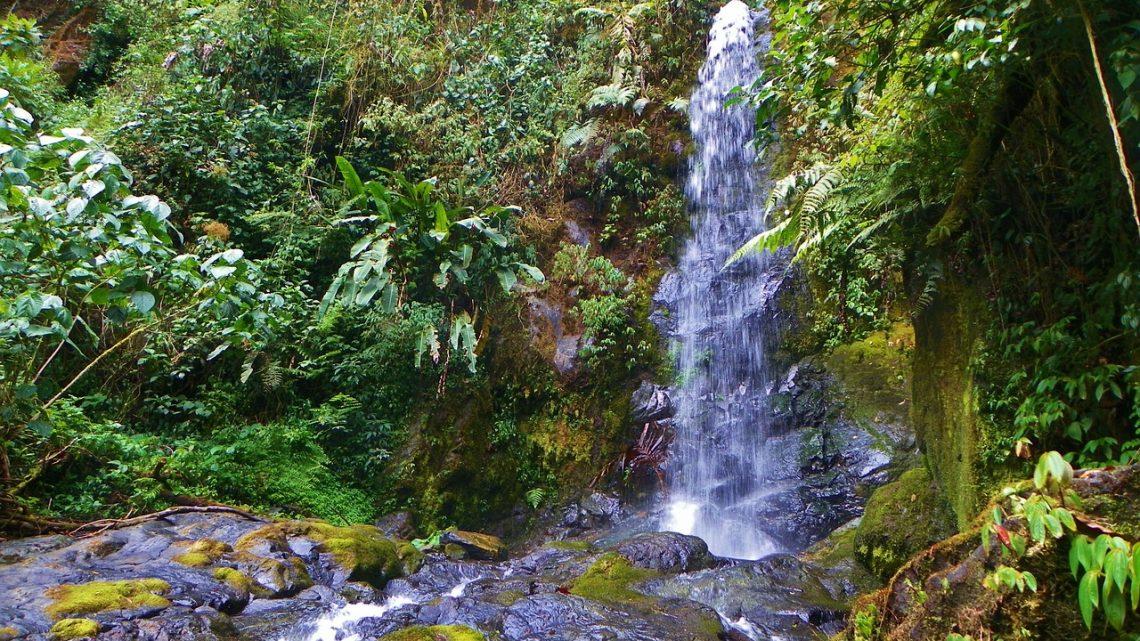 Costa Rica Voyage: à la découverte du parc national de Manuel Antonio